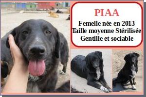 SERBIE - chiens prêts à rentrer (refuge de Bella et pensions) Piaa10