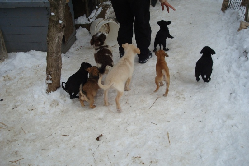 LES URGENCES DE CARMINA Puppie14