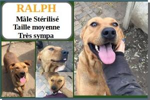 SERBIE - chiens prêts à rentrer (refuge de Bella et pensions) Ralph10