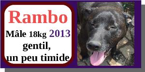 SERBIE - chiens prêts à rentrer (refuge de Bella et pensions) - Etat au 15 aout 2021 Rambo10