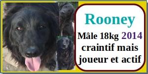 SERBIE - chiens prêts à rentrer (refuge de Bella et pensions) - Etat au 15 aout 2021 Rooney10