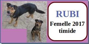SERBIE - chiens prêts à rentrer (refuge de Bella et pensions) - Etat au 15 aout 2021 Rubi11