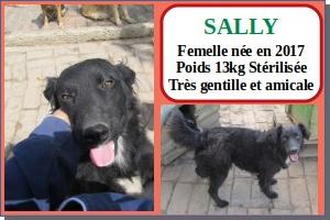 SERBIE - chiens prêts à rentrer (refuge de Bella et pensions) Sally10