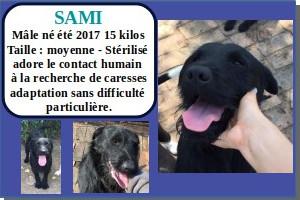 SERBIE - chiens prêts à rentrer (refuge de Bella et pensions) Sami10