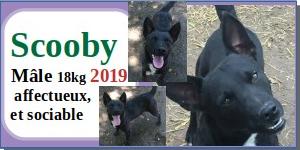 SERBIE - chiens prêts à rentrer (refuge de Bella et pensions) - Etat au 15 aout 2021 Scooby10