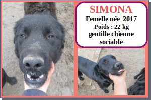 SERBIE - chiens prêts à rentrer (refuge de Bella et pensions) Simona10