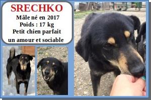 SERBIE - chiens prêts à rentrer (refuge de Bella et pensions) Srechk11