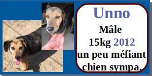 SERBIE - chiens prêts à rentrer (refuge de Bella et pensions) - Etat au 15 aout 2021 Unno11
