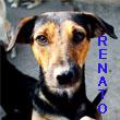 SERBIE - chiens prêts à rentrer (refuge de Bella et pensions) V-rena10