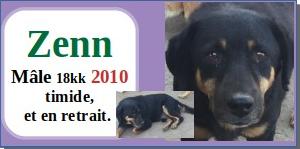 SERBIE - chiens prêts à rentrer (refuge de Bella et pensions) - Etat au 15 aout 2021 Zenn10