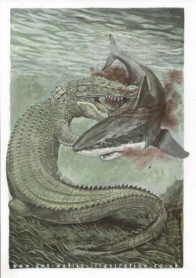 ILUSTRAÇÕES ANIMAIS Croc-s10