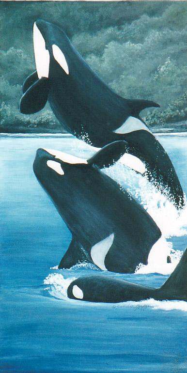 ILUSTRAÇÕES ANIMAIS Orcas10