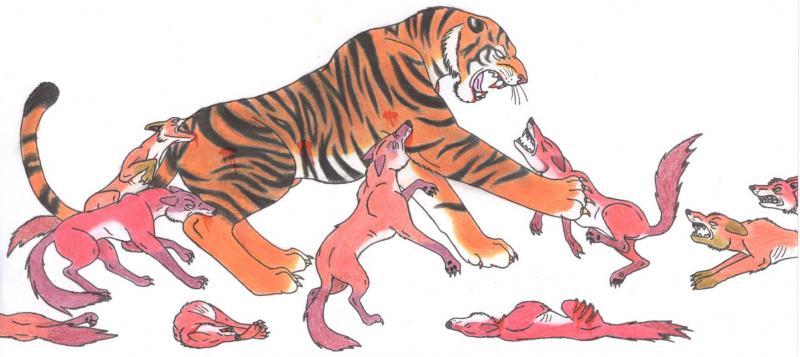 ILUSTRAÇÕES ANIMAIS Tigre_10
