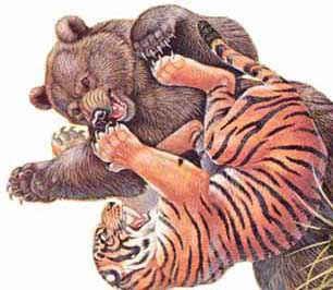 ILUSTRAÇÕES ANIMAIS Tigre_12