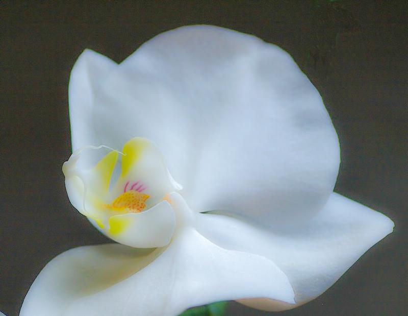 mon orchidée (ajout  8/01 ) Test-111