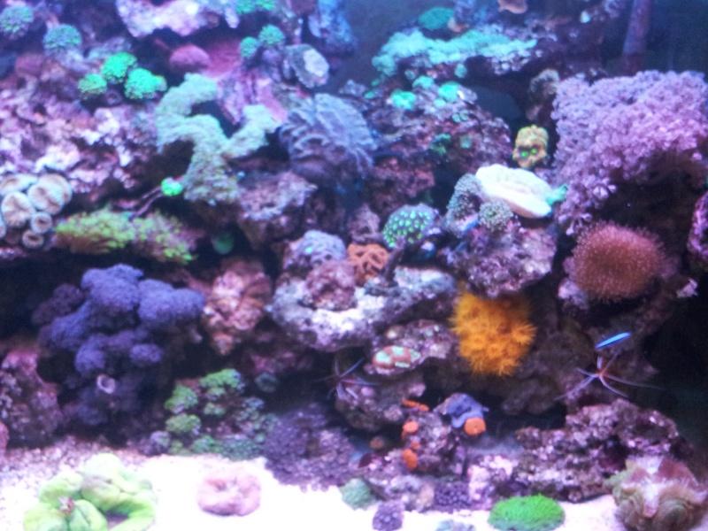 """Mon nouvel aquarium """"david59"""" - Page 4 2012-112"""