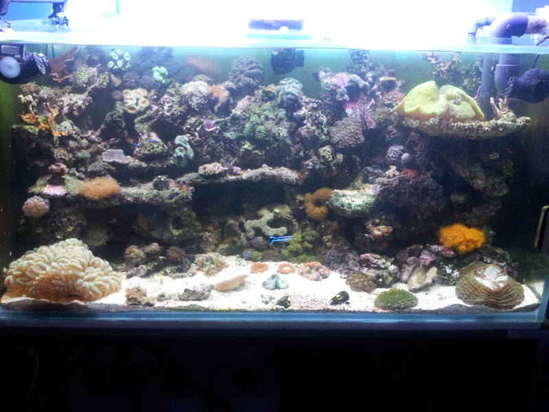 "Mon nouvel aquarium ""david59"" - Page 4 2012-113"