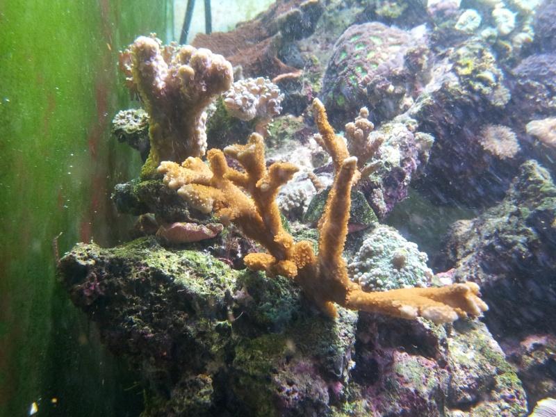 """Mon nouvel aquarium """"david59"""" - Page 4 2012-124"""