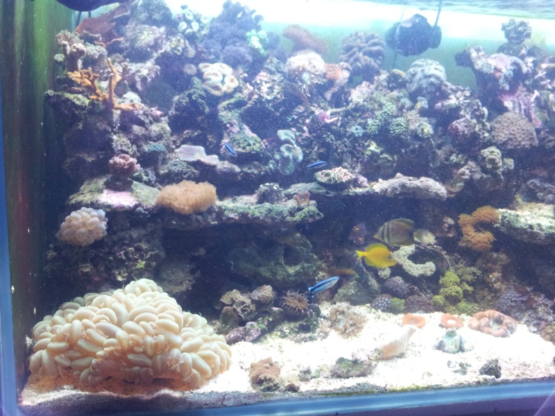 "Mon nouvel aquarium ""david59"" - Page 4 2012-129"