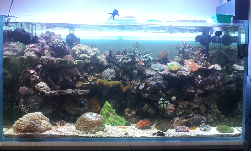 "Mon nouvel aquarium ""david59"" - Page 6 2013-024"