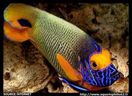 Quel poisson rêvez-vous de possèder? - Page 2 Images10