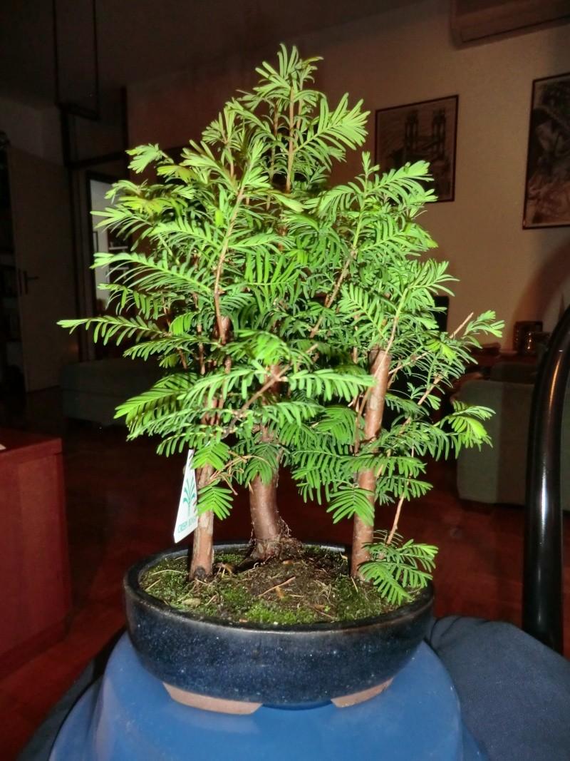 Defogliazione foglie secche Cimg2210