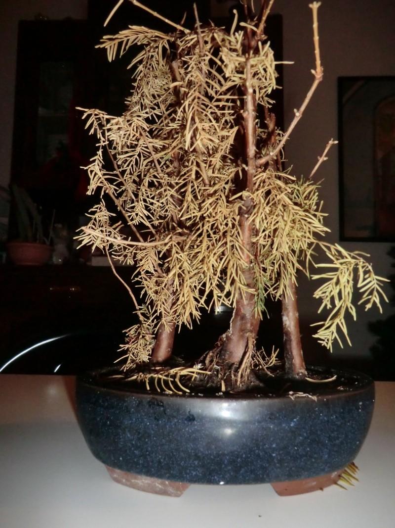 Defogliazione foglie secche Cimg2911