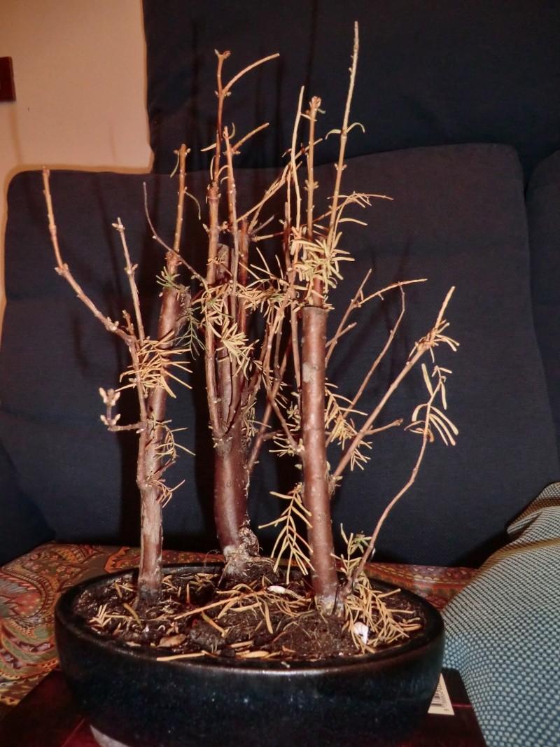 Defogliazione foglie secche Retro12