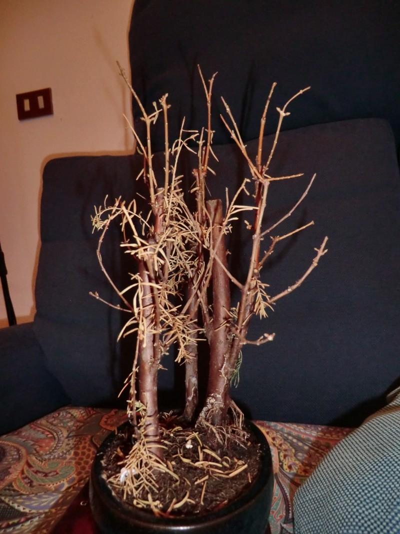 Defogliazione foglie secche Sinist11