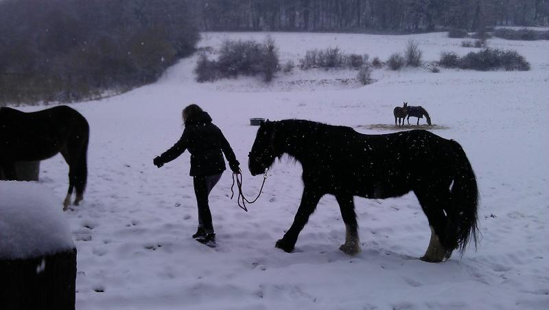 """Concours photo  """"L'irish cob dans la neige"""" - Page 2 Imag0515"""