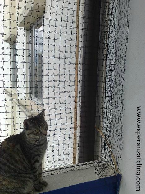 redes - Resumen de ideas para mosquiteras y redes ventanas y balcón para gatos. 16092011