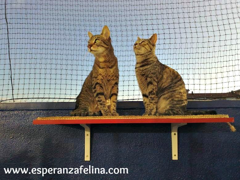 redes - Resumen de ideas para mosquiteras y redes ventanas y balcón para gatos. 21062010