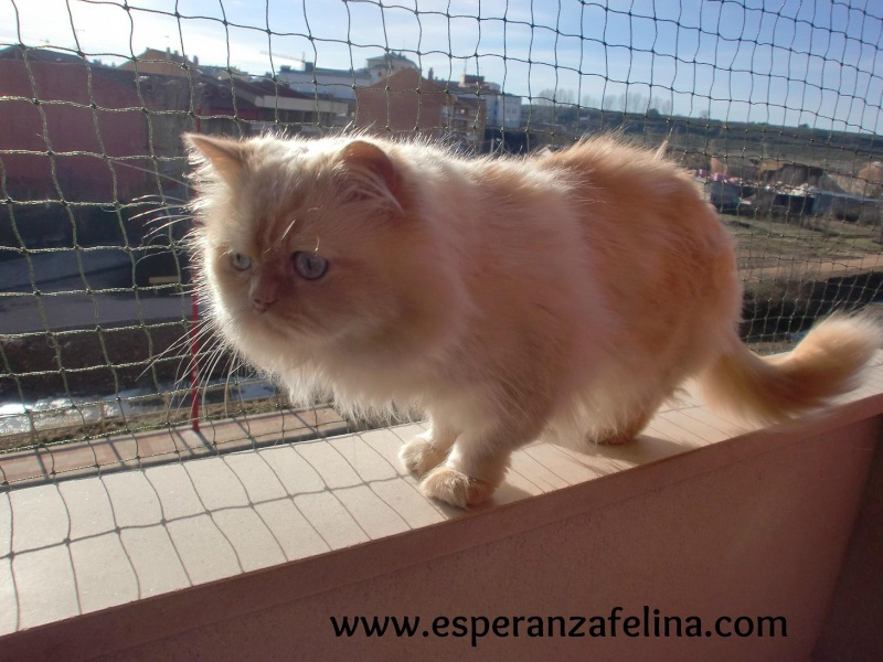 redes - Resumen de ideas para mosquiteras y redes ventanas y balcón para gatos. Cimg3712