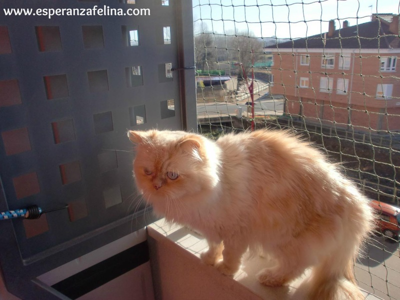 Resumen de ideas para mosquiteras y redes ventanas y balcón para gatos. Cimg3713