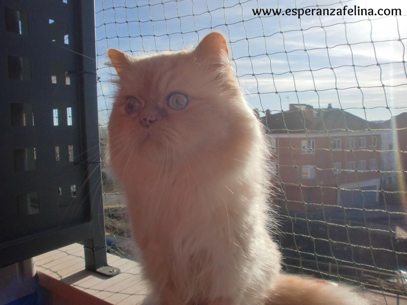 Resumen de ideas para mosquiteras y redes ventanas y balcón para gatos. Cimg3714