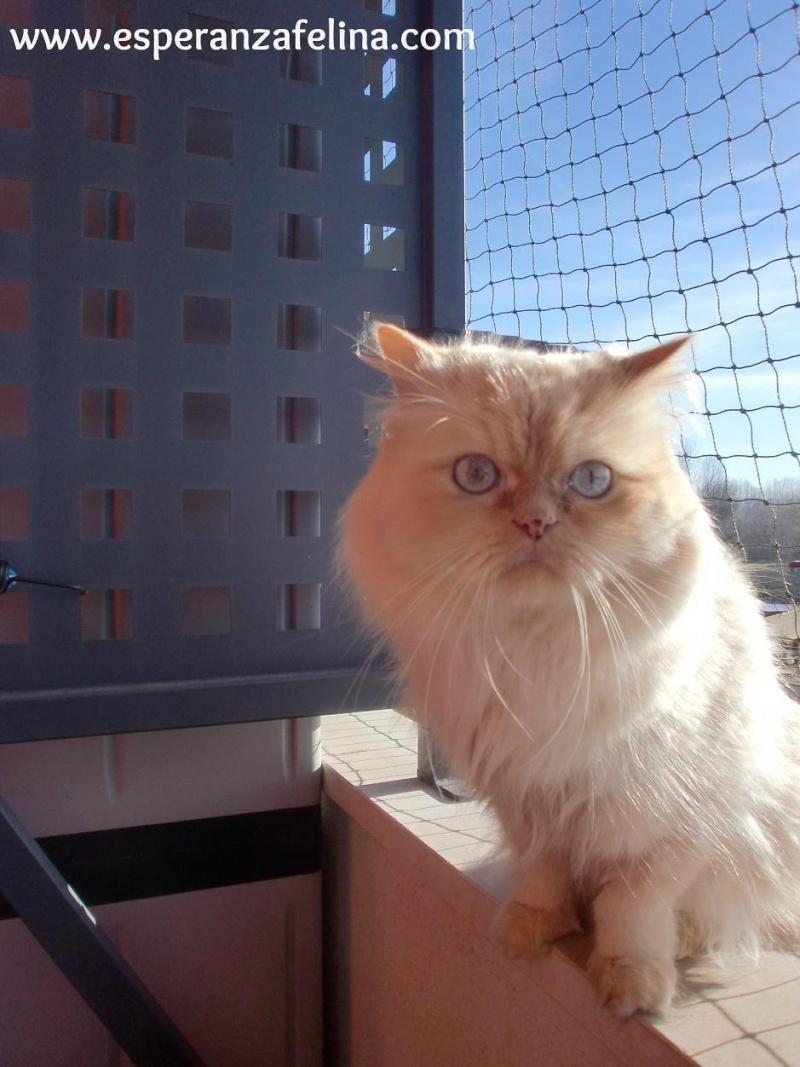 Resumen de ideas para mosquiteras y redes ventanas y balcón para gatos. Cimg3715
