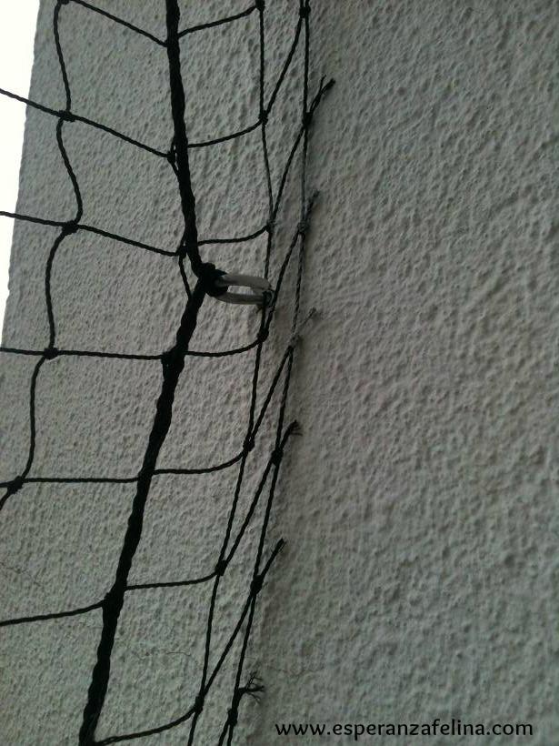 redes - Resumen de ideas para mosquiteras y redes ventanas y balcón para gatos. Img_6413