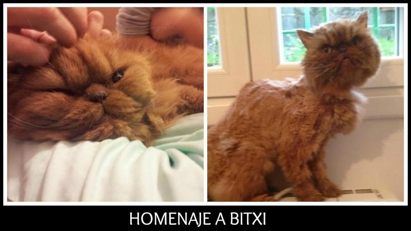 Bitxi                              Picmon10
