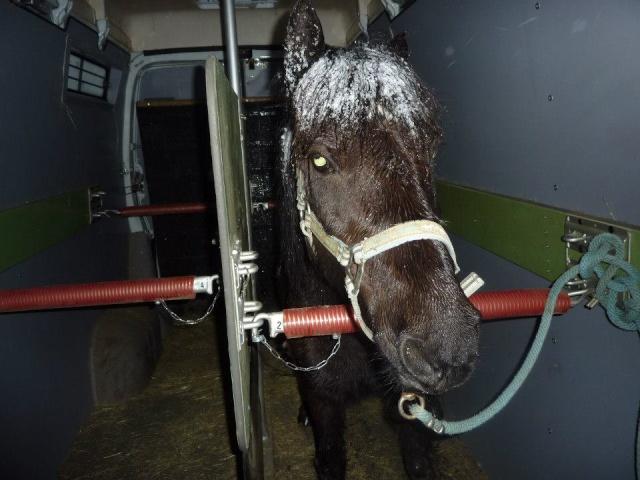 CHARLIE - ONC poney née en 1999 - adoptée en janvier 2013 par mammiemitsou Charli11