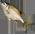 L'étang à poissons [Dans le jardin fermier et aquatique] Carp10