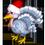 Dinde Blanche, Dinde Noire au Bourbon, Dinde Rouge, Dinde Noire, Dinde de Thanksgiving, Dinde de Noël => Viande de Dinde D_dind11
