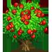 Vous cherchez un arbre ? Venez cliquer ici !!! G_guar10