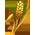 Le Nichoir à Tisserins => Panier à Tisserin Wheat_13