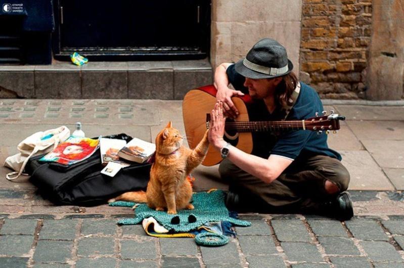 Про кота и музыканта Ddd3rd10