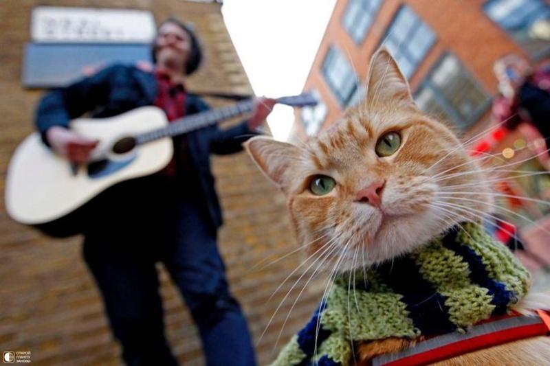 Про кота и музыканта Dddcfu10