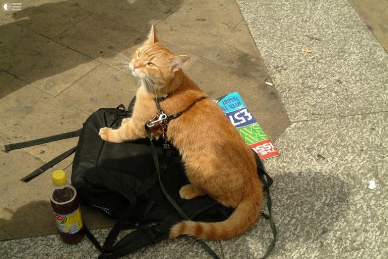 Про кота и музыканта Dddixy10