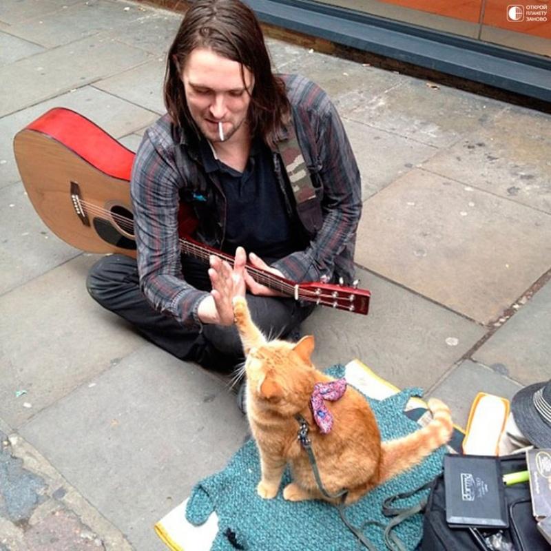 Про кота и музыканта Dddww_10