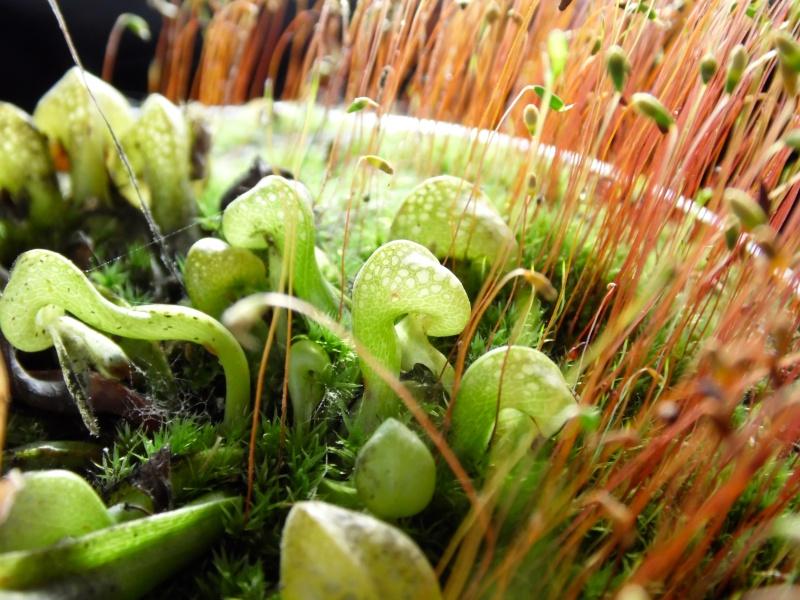 Les perles hivernales de Maaaax Sam_0216