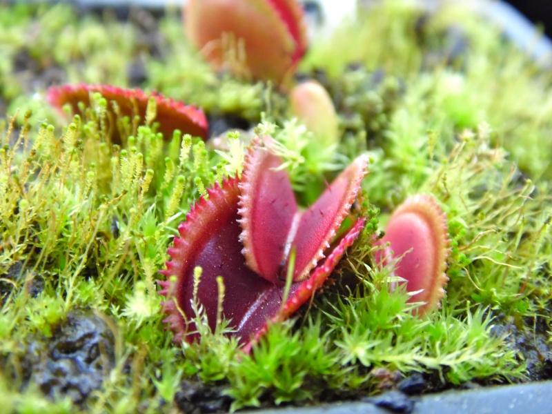 Les perles hivernales de Maaaax Sam_0222