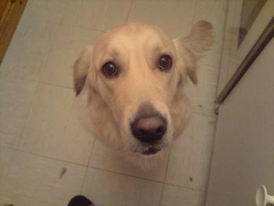 Accident domestique: Attention à vos jeunes chiens!  Legume25